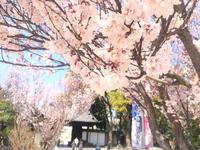 徳川園。名古屋市東区