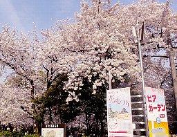 鶴舞公園花まつり: お花見ビヤガーデン
