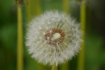 シェアハウスの中庭に咲き乱れる。五月。