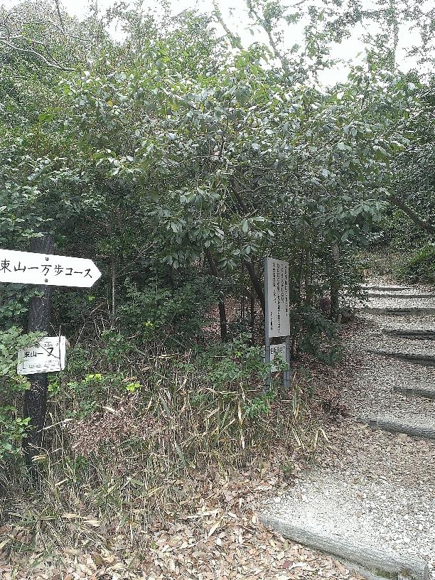 ここから、トレラン練習にはもってこいの坂道。東山一万歩コース
